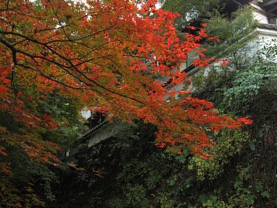 ohara_01.jpg